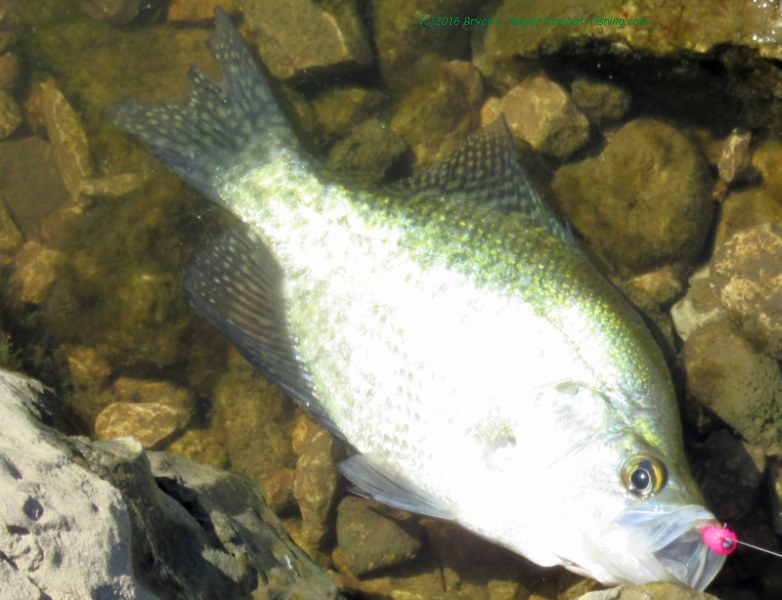 crappie fishing on the lower susquehanna