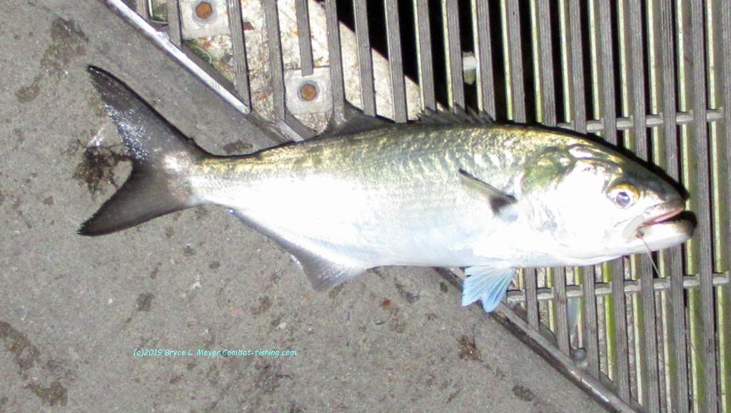 "Charlie Brewer Sliders 3/"" Bass Grub Sliders Swing Soft Plastic Lures Bass Cod"