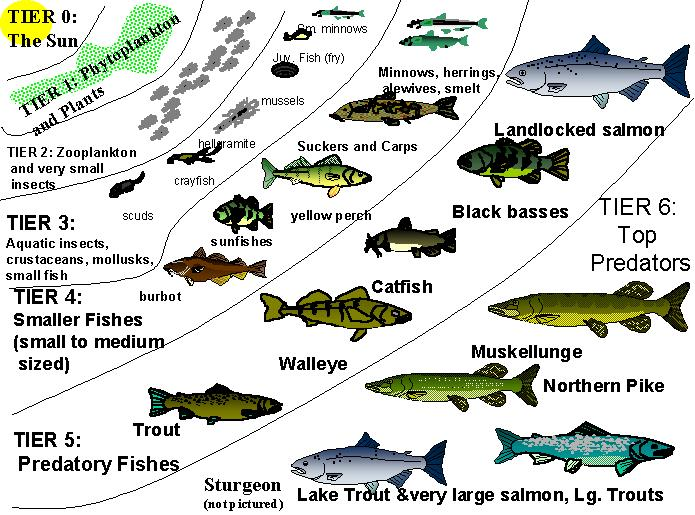 Types of fish in lakes and ponds for Pond fish identification