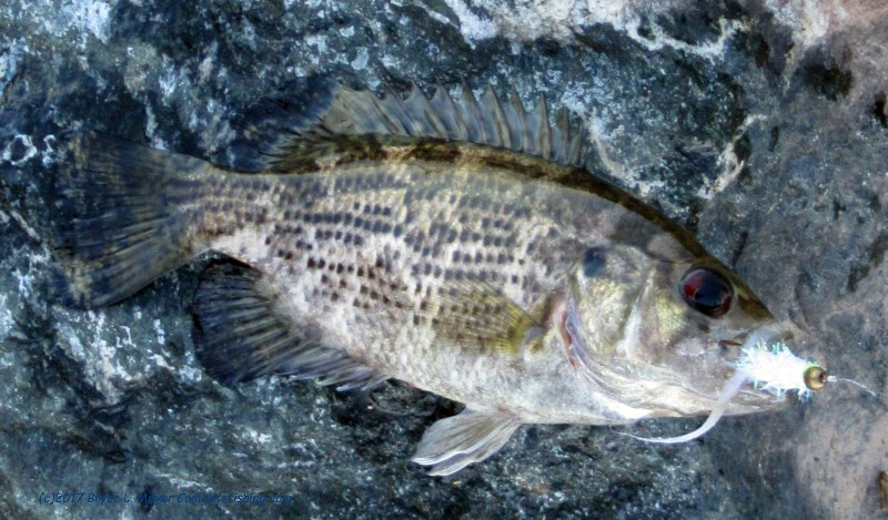 Latest combat fishing adventures and reports for Maryland state fish
