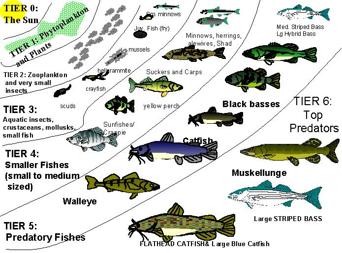 Ecology of lakes and ponds for anglers for Pond fish varieties